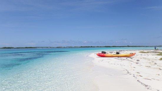 South Caicos: Eco tour was just amazing!