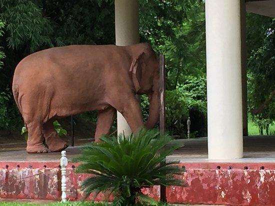 Hanya Ada 3 Gajah Ulasan White Elephants Yangon Rangoon