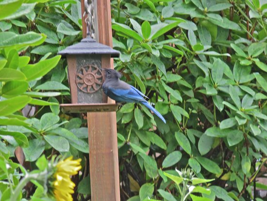 Quinault, WA: Feeders outside the enclosed porch