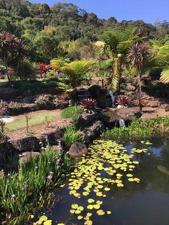 Maleny, Αυστραλία: Beautiful!