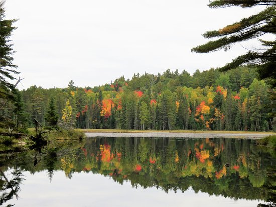 Trail tips Picture of Beaver Pond Trail Algonquin Provincial