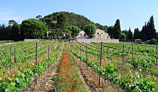 Grabels, Francia: Vue d'ensemble du domaine