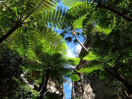 Roma, Australia: Carnarvon National Park