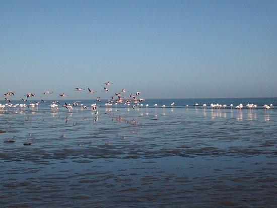 월브스 베이, 나미비아: 홍학이 날아가는 장면