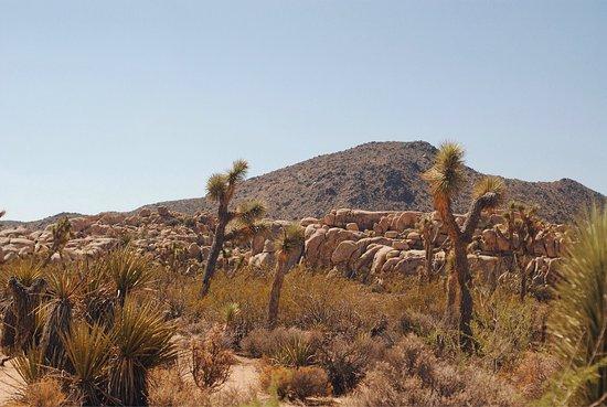 Twentynine Palms, CA: photo2.jpg