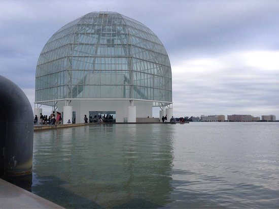 photo7.jpg - Picture of Tokyo Sea Life Park, Edogawa - TripAdvisor