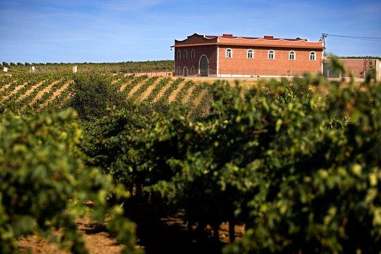 Villafranca de los Barros, Ισπανία: Bodega Pago de Las Encomiendas, situada en el corazón de la tierra de Barros.