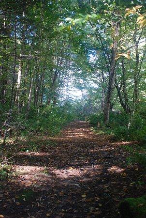 Stoneham-et-Tewkesbury, Canadá: Wanderweg Draveur Nord