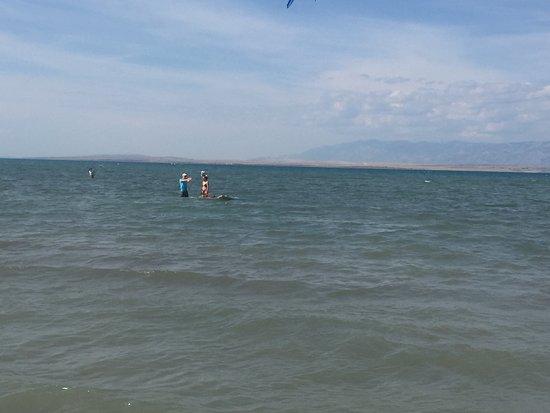 Laguna Beach Surfing Rental