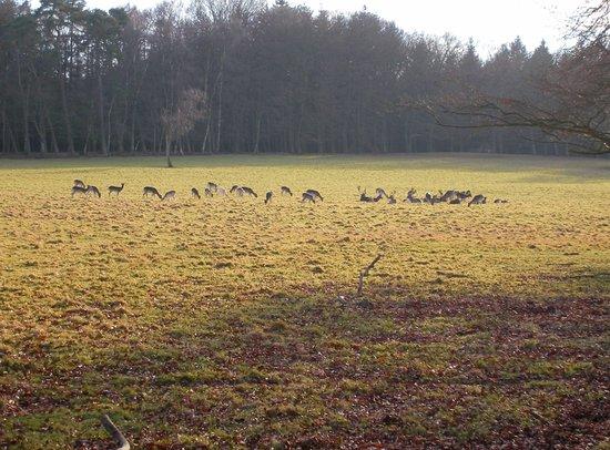 Wildpark Christianental: Hertenkamp in het Wildpark