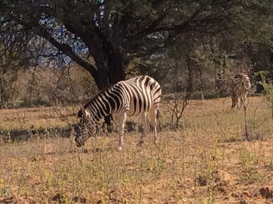 Thabazimbi, Sudáfrica: photo6.jpg