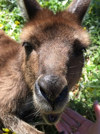Seddon, Australien: Fabulous hands-on encounter with these beautiful animals!