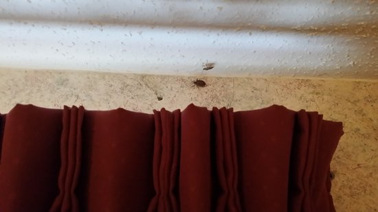 Hamburg, NY: bugs on the wall