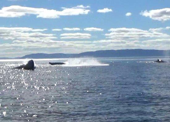 Les Escoumins, Kanada: Rorqual et baleine