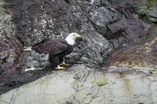 Sonora Island, Canada: This Bald Eagle was spotted near the resort.
