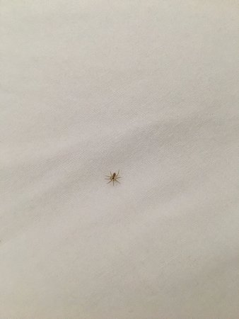 Econo Lodge Inn and Suites Pensacola: i don't think he paid for his room but he was nice and comfy under my pillow