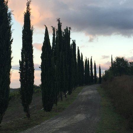 Murlo, Italie : Caratteristico paesaggio toscano stanze curate e molto in stile questa fattoria si distingue x l