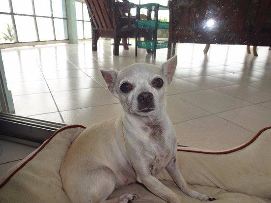 Ensuenos Del Mar S.A.: Guard dog