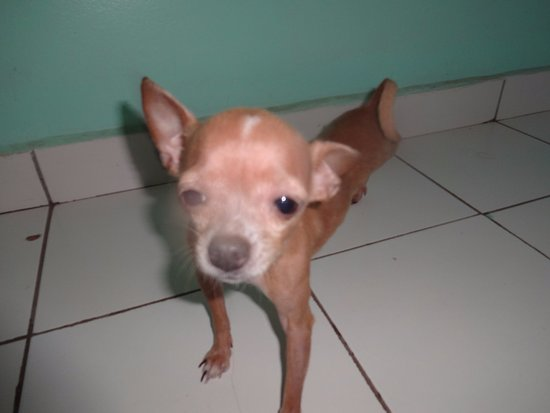 Ensuenos Del Mar S.A. : Guard dog #2