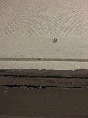 Hotel d'Ainay : mouche morte collée au mur