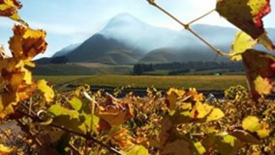 Creation Wines: Perfect setting in the Hemel and Aarde