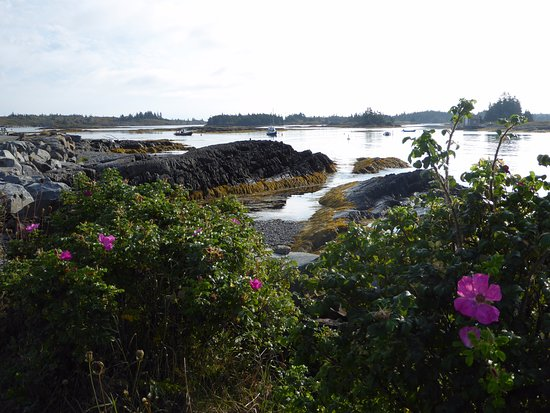 Lunenburg, Canadá: We liked the touch of pink from the wild roses