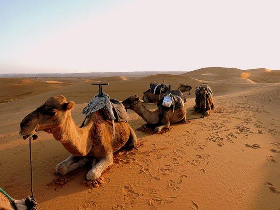 Resultado de imagem para caravana de camelos no deserto