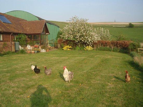 Down Barn Farm