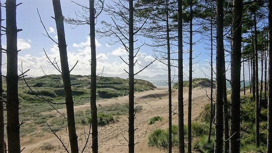 Newborough, UK: View of the beach from the forest