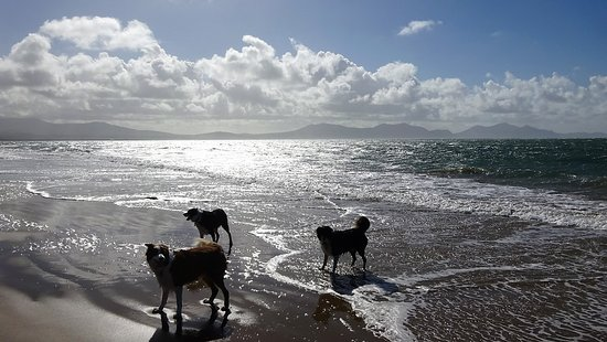 Dogs enjoying Newborough beach