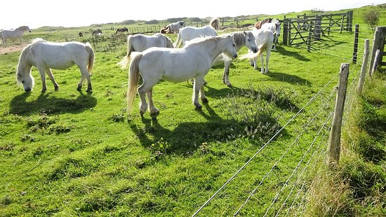 Newborough, UK: The neighbours