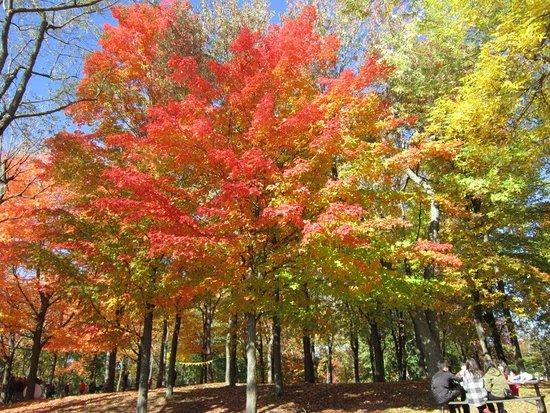 Mont (Mount) Royal: Pique-nique sous un arbre!