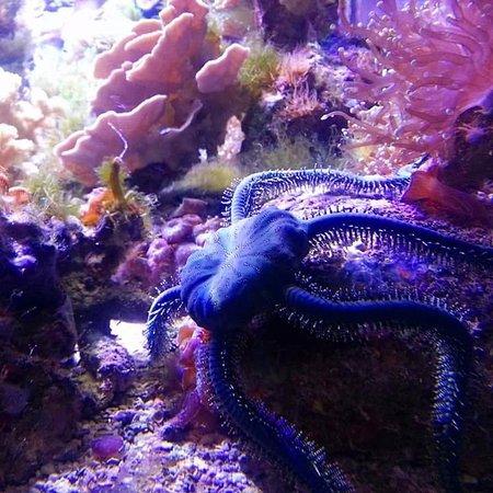 Entrance to Aquarium - Foto di ABQ BioPark Aquarium, Albuquerque ...
