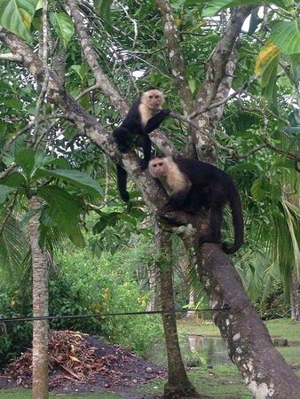 Cabinas Riverside: Wildlife everywhere!!