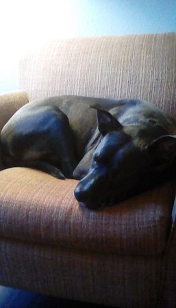 La Quinta Inn & Suites Mobile - Daphne: Our dog loved this chair