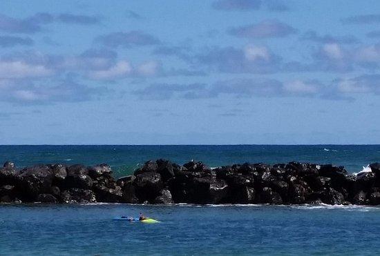 Wailua, HI: Fish watching behind boogie board