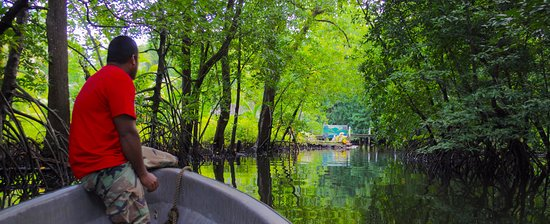 Kosrae, Micronesia: boat trip into the forest up the mangroves (make sure the tide is right!)