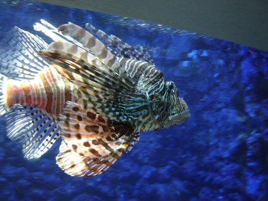 Hamilton, Bermuda: Beautiful But Voracious Lionfish