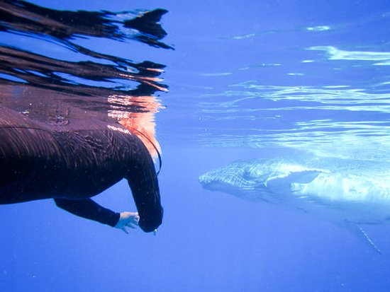 Uoleva Island, Tonga: Whale swimming, get up close and personal