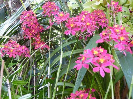 Orchidee Im Gewachshaus Mit Exotischen Pflanzen Picture Of Isle Of