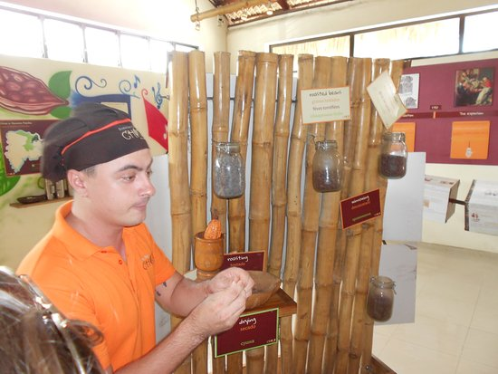 ChocoMuseo Punta Cana : Learning how Chocolate is Made