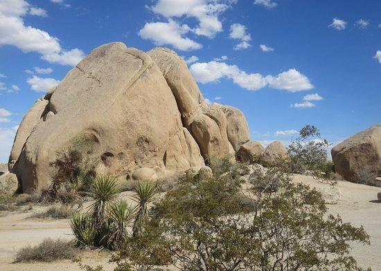 Jumbo Rocks Campground, Joshua Tree National Park, CA