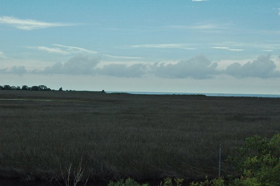 St. Marks National Wildlife Refuge: SW from the road through the black grass