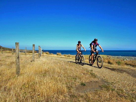 The Bike Shed - Pencarrow