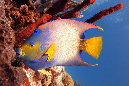 Paradise (Paraiso) Reef : Una de las tantas especies de Paradise Reef