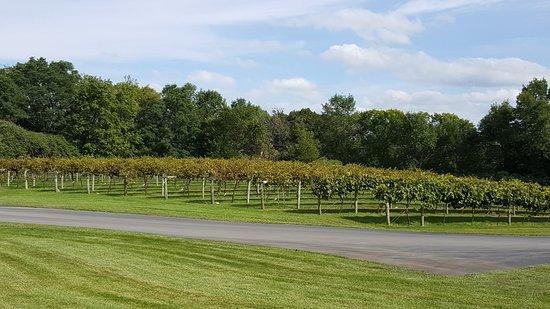 Chisago City, MN: The vineyard