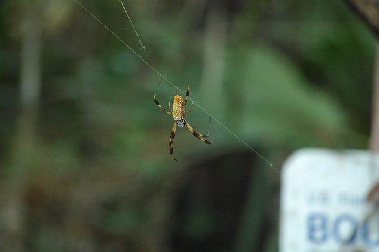 St. Marks National Wildlife Refuge: Big ol' spider