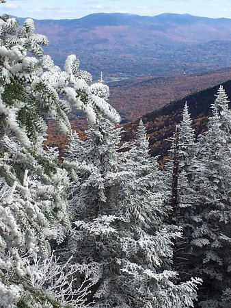 Stowe Mountain Auto Toll Road: Amazing foliage with snowy pine trees! Frozen!!