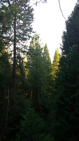 Twain Harte, CA: Wonderful forest view from the lower deck.