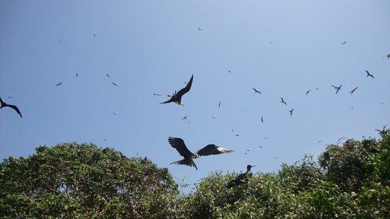 Bahia de Caraquez, Ecuador: Aves de varias especies.